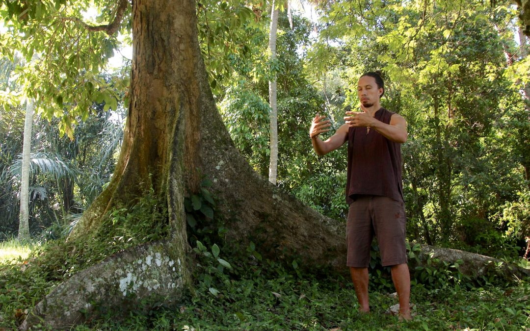 TAI CHI FOREST SYSTEM OF INTERNAL MARTIAL ARTS {The Tree Analogy}